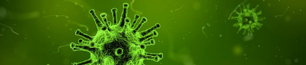 wirusy i bakterie